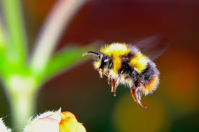 WHAT TO DO ABOUT ALLERGIES WHEN THE BIRDS AND THE BEES COME OUT AGAIN