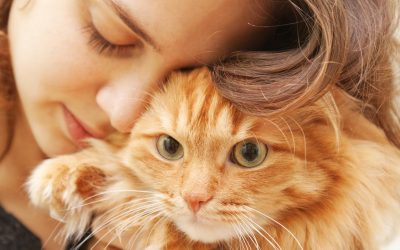 Can I Keep My Pet If I Have Cat Allergies?