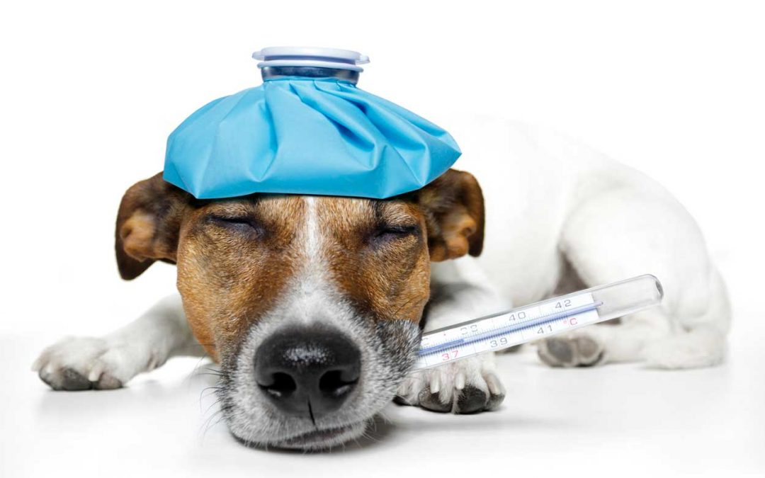 How to Manage Dog Allergy Symptoms When Travelling