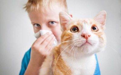 Allergy Care in Amherst May Have a Cure for Cat Allergies
